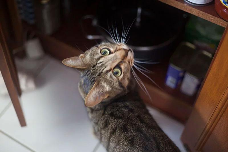 walker-being-sneaky-cat-photobomb