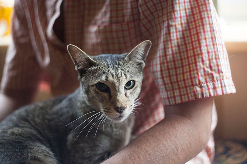 reasons-why-cats-purr-around-humans