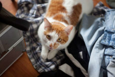 Why Do People Like Cats? 14 Reasons Behind All the Cat Love