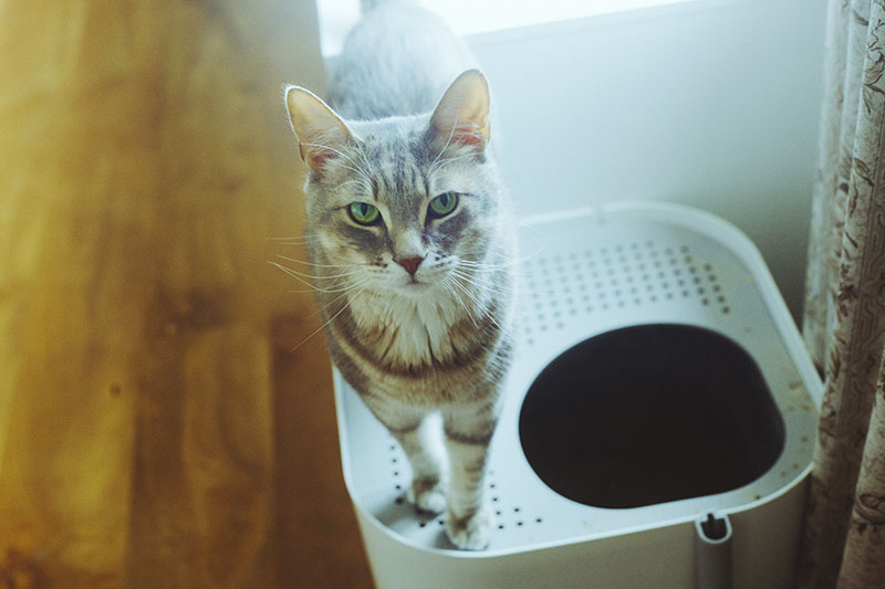 Cat + Limited Space? Best Litter Boxes for Even the Smallest