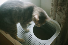 Stinky Litter? How to Reduce Odors & Keep Cat Litter Box Smells Away