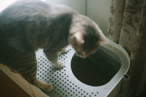 Stinky Litter? Here's How to Keep a Cat Litter Box From Smelling