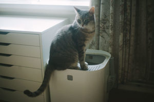 Why I Now Prefer Top Entry Cat Litter Boxes