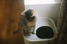 How to Train a Cat to Use a Top-Entry Litter Box