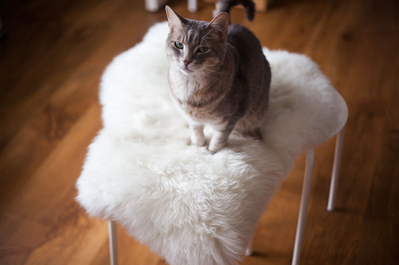kitty-cat-sitting-on-ikea-marius-stool-diy-hack-sheepskin