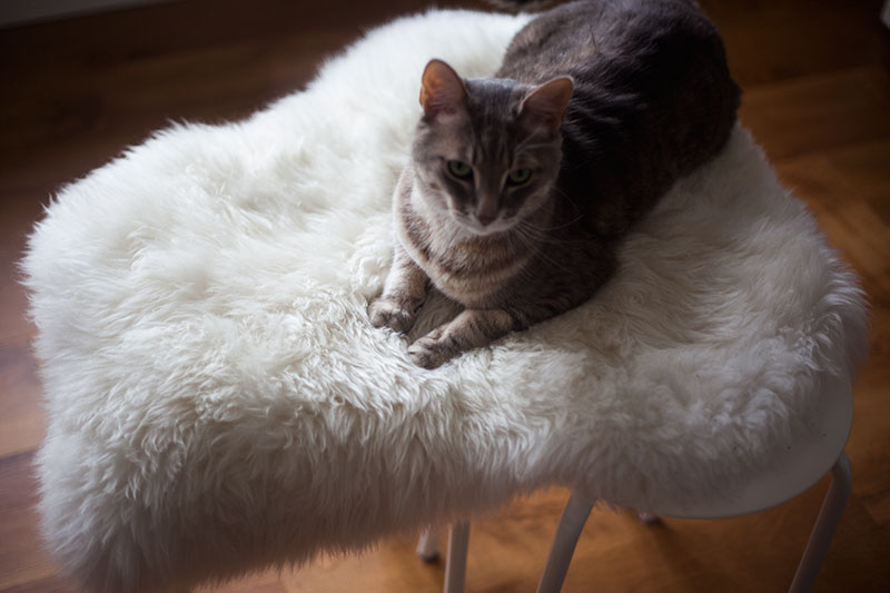 cat-furniture-diy-hack-ikea-marius-stool-rens-sheepskin