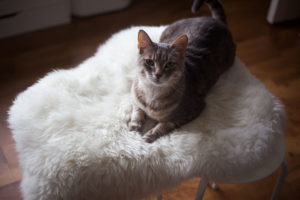 The 2-Second Ikea Marius Cat Seat Hack: The Easiest DIY in the World