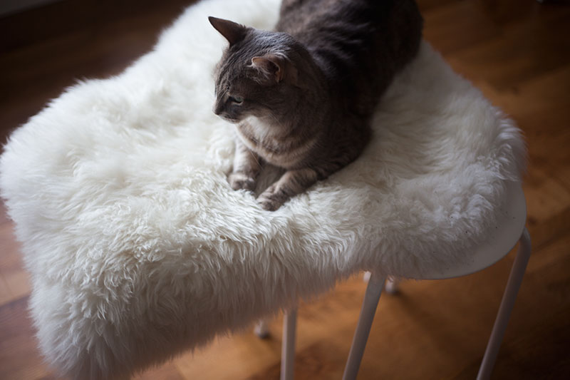 kittyclysm-ikea-marius-cat-seat-diy-easy-sheep-skin