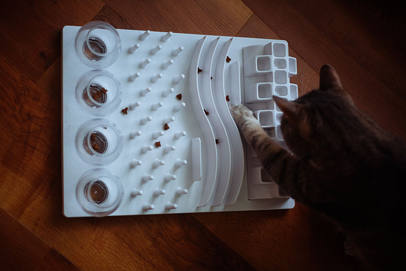trixie-snack-board-activity-fun-cat-toy-review