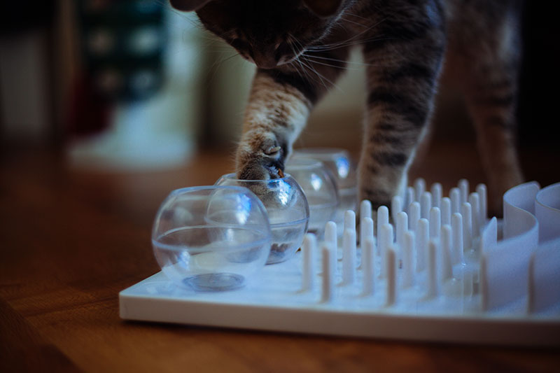 trixie-fun-board-activity-center-kittyclysm-review