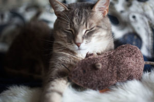 cat-holding-petlinks-jeepers-creepers-catnip-toy