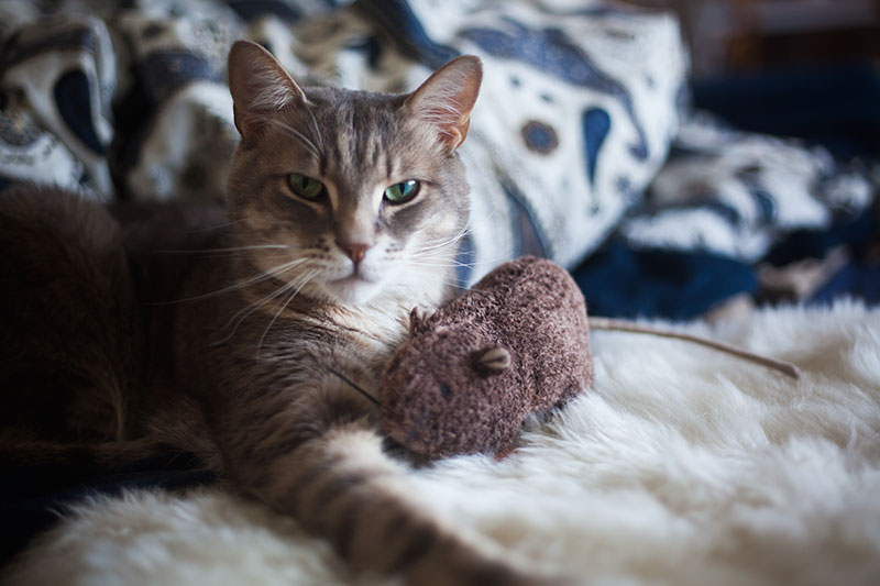 catnip-toy-rat-with-cat-avery-kittyclysm