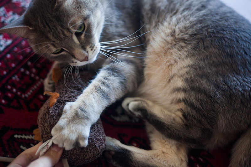cat-exercising-by-playing-with-catnip-rat