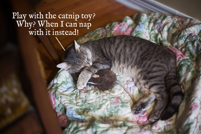 why-play-when-you-can-nap