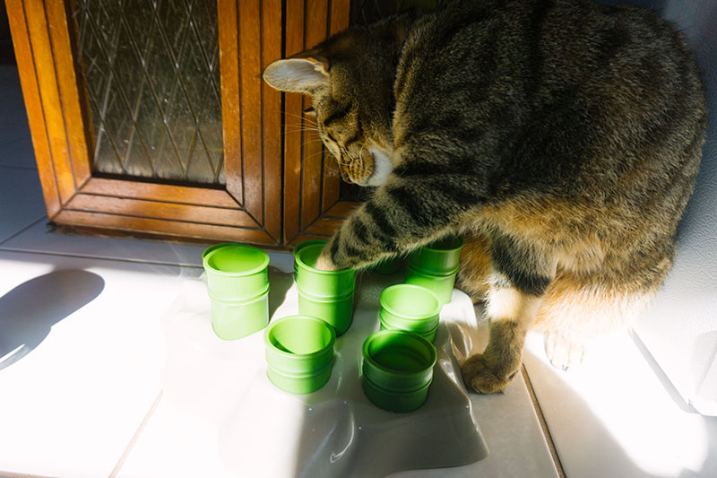 cat-using-food-puzzle-tunnel-toy