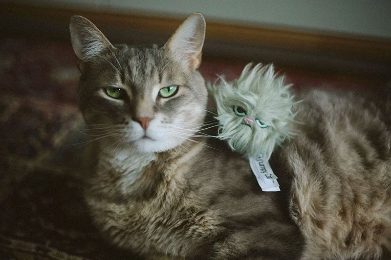 grumpy-cat-face-with-grumpy-cat-toy