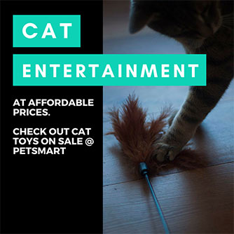 cat toy sale items