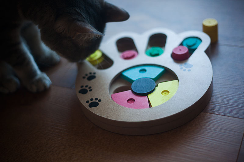 pet-feeder-toy-review-pryus-paw-food-puzzle