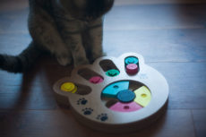 Pyrus Pet Intelligence Paw Puzzle Interactive Food Toy Review