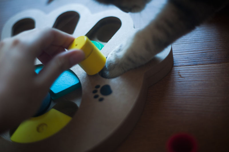 pyrus-pet-intelligence-puzzle-feeder-review