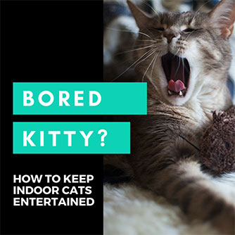 keep bored indoor cats entertained