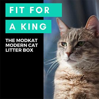 modern cat litter box