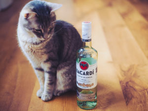 Too Fun: Alcohol Inspired Names for Cats, Dogs & Other Pets!