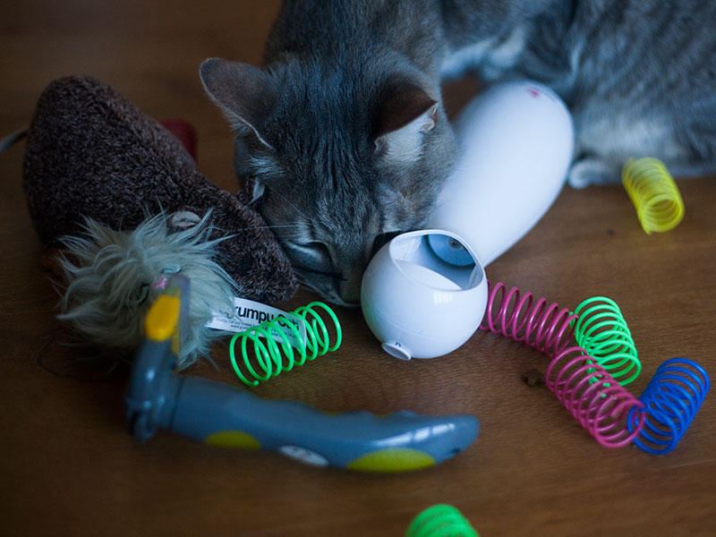 black-friday-deals-petsmart-petco-zooplus-cat-site