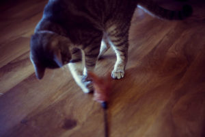 Cat Exercise Toys: Create a Feline Fitness Home Gym!
