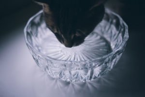 A Cat's Relationship With Water: Love-Hate & Oh So Complex