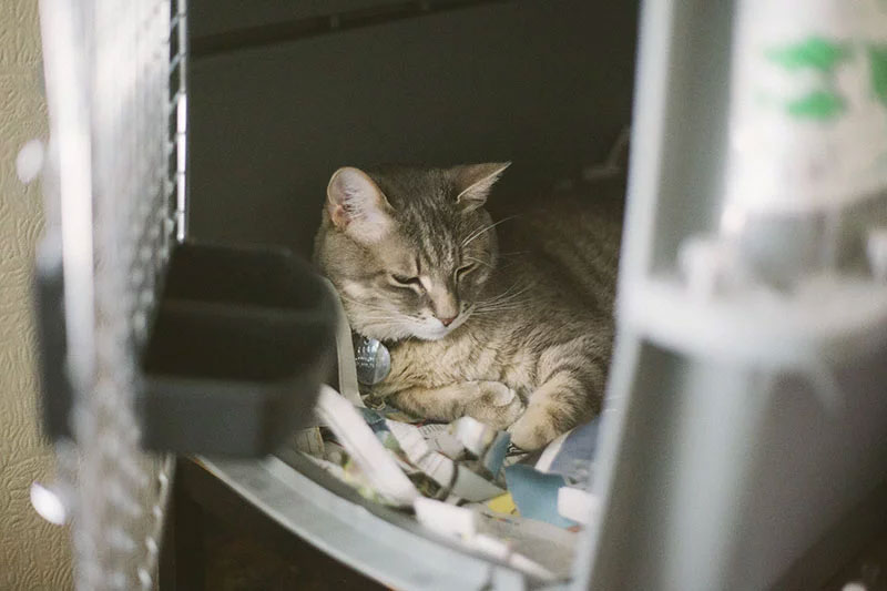 cat-loves-cage-sleeping-in-pet-carrier