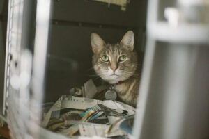 Does Your Cat Hate Carriers? Here's How You Can Fix That Fear!
