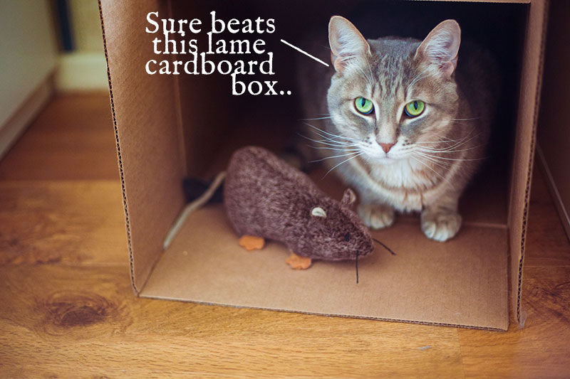 outdoor-cat-houses-beat-lame-cardboard-boxes