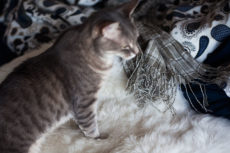 Cat Kneading: Why Cats Knead Things (& People) with Their Paws