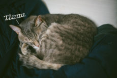 Cat Snoring: Why Do Cats Snore? Is It Normal? Are Snoring Cats Sick?