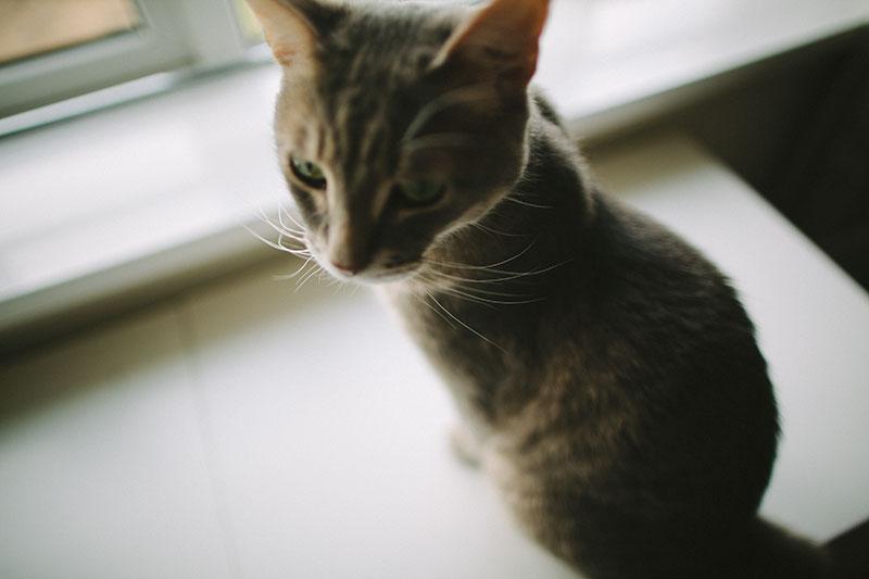 hidden-cat-litter-boxes-cute-kitty-furniture