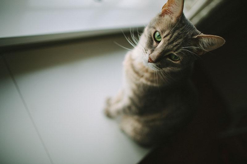 hidden-cat-litter-box-in-human-looking-furniture