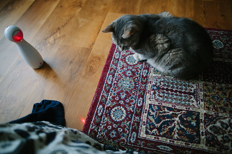 automatic-laser-cat-toy-frolicat-bolt-review-kittyclysm