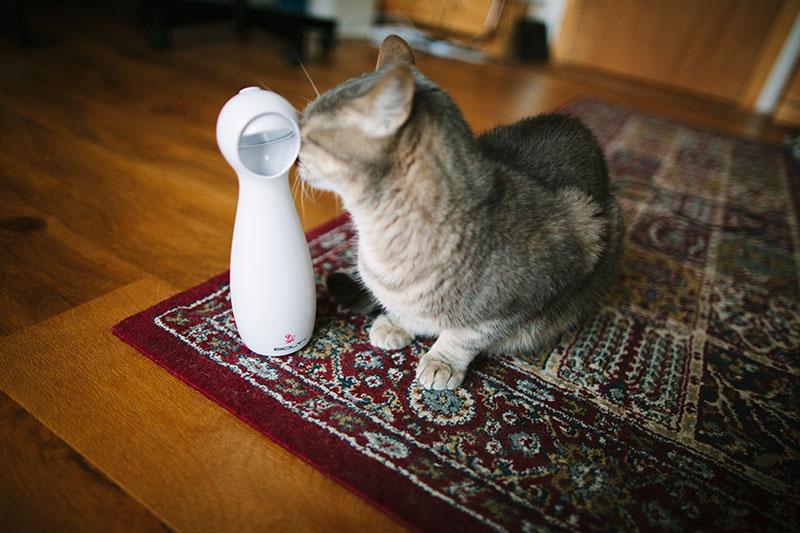 cat-blog-review-kittyclysm-frolicat-bolt-laser-toy