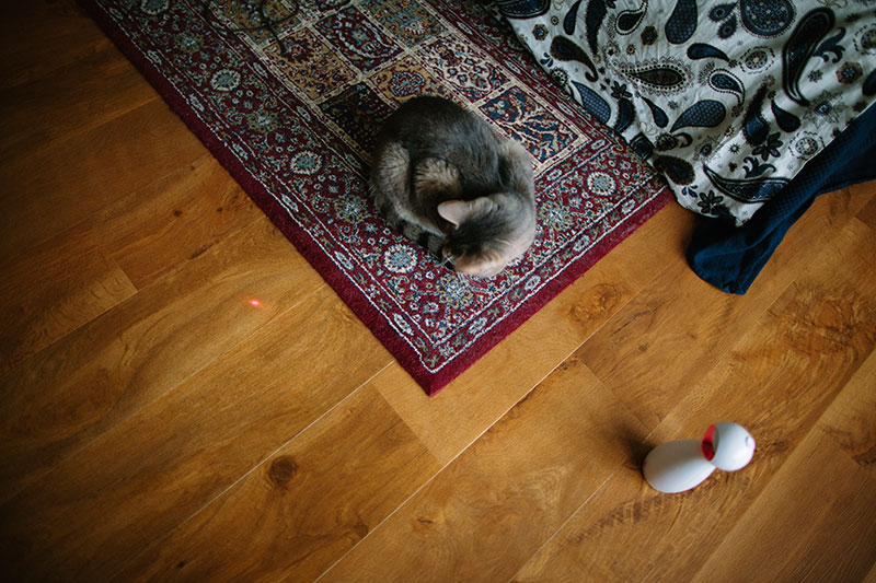 petsafe-frolicat-bolt-automatic-laser-toy-review