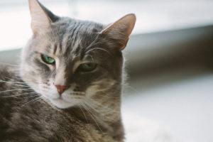 pet-cat-problems-frustrating-negative-emotions