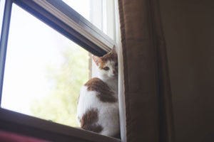 House Cat in Europe or the UK? How Do You Deal With Windows?
