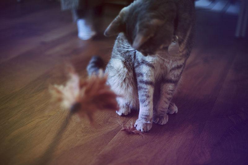 cat-feather-toy-varieties-best-options