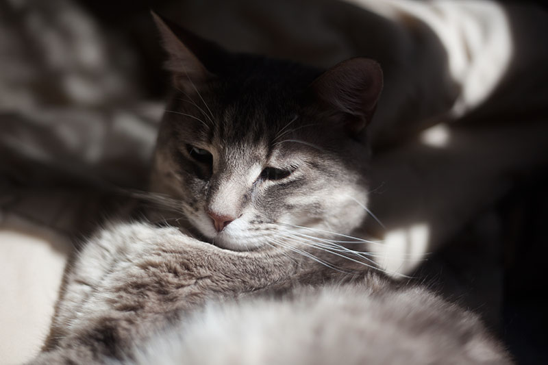 cat-pet-care-article-grinding-teeth