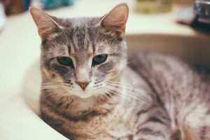 should-you-bathe-domestic-house-and-outdoor-cats