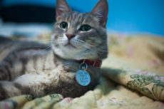 Cat Collars with Bells: The Classic, The Cute, & The Careful