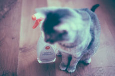 Is Vinegar Safe for Cats? Is It Harmful: 1. As a Cleaner? 2. If Ingested?