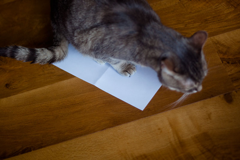 cat-standing-on-paper-on-floor