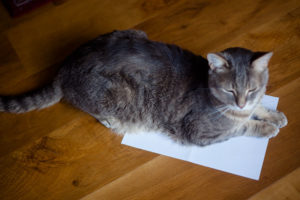 why-cats-lay-on-paper