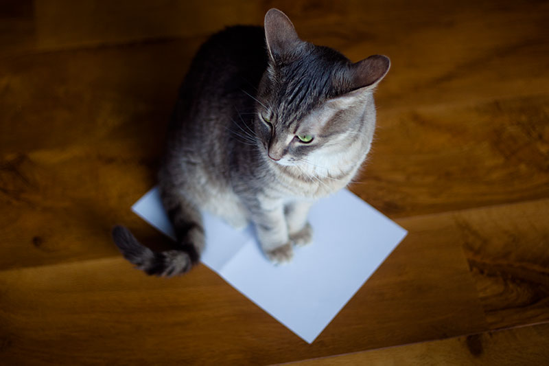 why-cats-love-paper